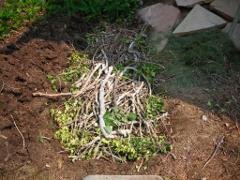hugelkultur bury