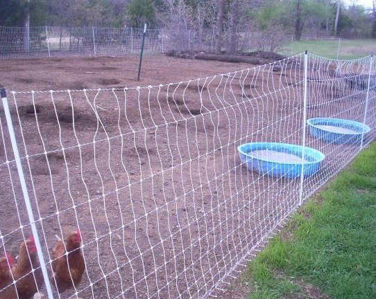 a typical chicken run