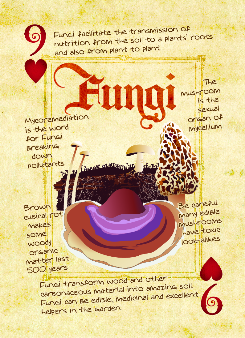 fungi playing card
