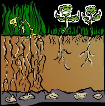 Ring Of Disease In Peat Moss