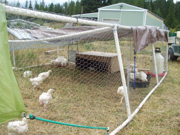 portable chicken pen made from PVC