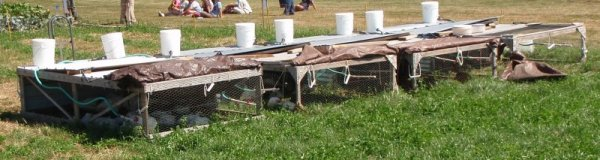 chicken tractor or maybe a salatin-style pastured poultry pen