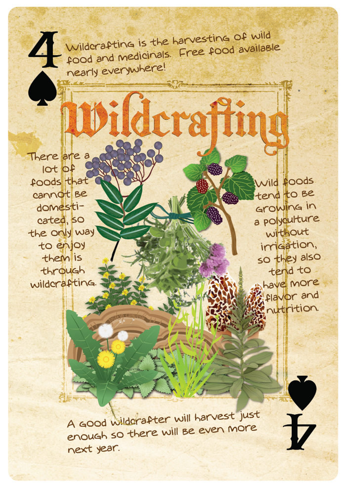 permaculture playing cards poster