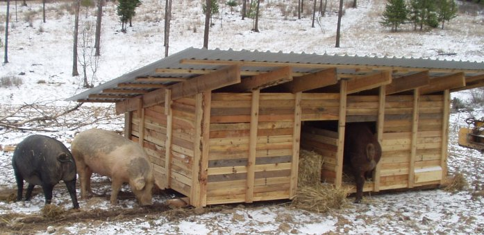 Building A Farrowing Hut